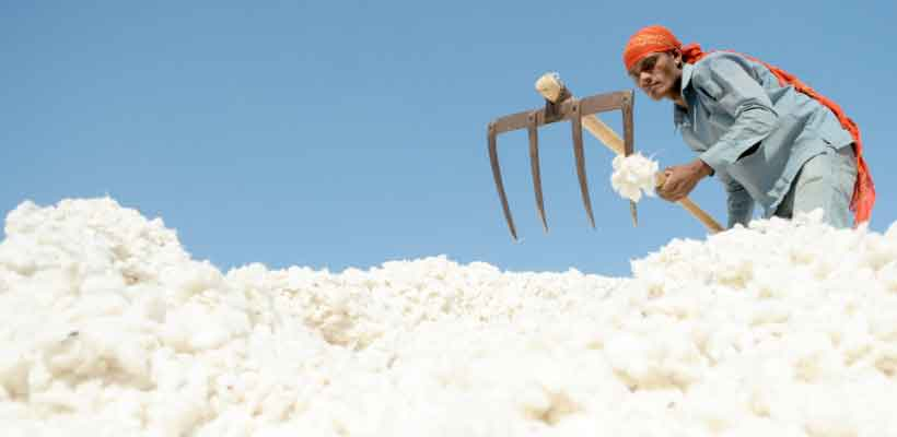 India is the largest producer of cotton in the world